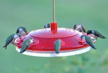 Birds / by Pat Worden