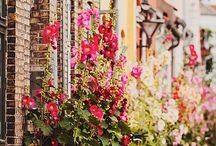Flowers / by Jill