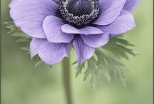 Anemone / by Elysa Casey