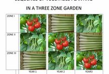 SEQUENCE OF PLANTING IN A VEGETABLE GARDEN   rev.1 / If same type is planted in consequative years there is risk of disease and crop yield will reduce; so a diversification should be introduced. A three year return period is suggested in a garden divided to three zones.