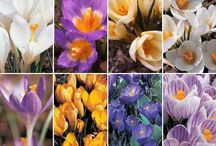 Spring Love this Season!!!! / Spring