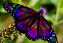 Winged Things  / Buttrerflies, Birds, Insects With Wings / by Username