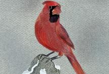 BIRDS - pattern & illustration / Inspirational collection of birds