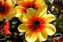 Giallo e arancione i colori del sole