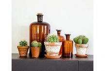 Cactussen, Succulenten & Agaves