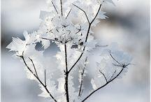 // Snow