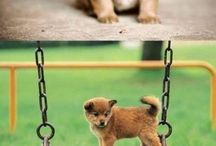 cute doggys!!!!