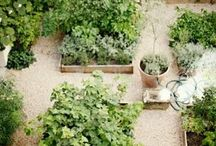 Outdoor | Vegies and herbs