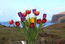 Julie's Flowers / Julie has fresh flowers everywhere