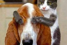 Who Says We Can't Be Friends? / Cats and dogs together!