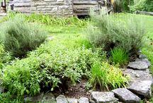 Gardenning & Outdoors / by Tamara-Lynn St-Pierre