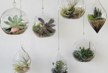 Plants / by - Chara Houssart -