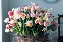Kertészkedés / virágok