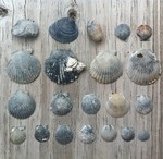 SHELLS / This is a board full of shell inspiration and there are a few beautiful shells we found in #Bahamas too!