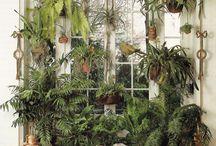 Jardines / Vegetación con flores
