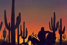 Biker Art / by Roy Catalano