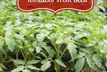 DIY Vegetable Gardening / Grow your own vegetables it's easy and fun! Get DIY vegetable gardening suggestions and tips.