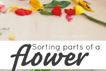 Sorting parts of a flower