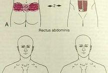 weetjes lichaam
