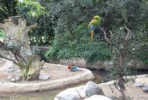 Zoo La Palmyre / animaux divers
