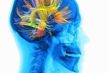 Neurodidaktik / Gehirnforschung - Theorie und Praxis -Umsetzung im Fremdsprachenunterricht