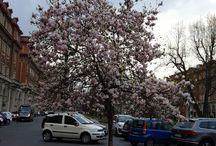 spring in Turin