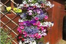 planter/blomster