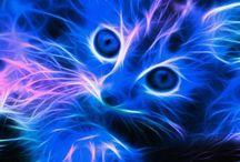 gatinhos são tão fofinhos!!!!!