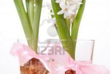 Inspiratie - bloemen en planten