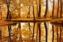 herfst / beautiful creation