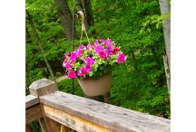 gardening / by mary tilger