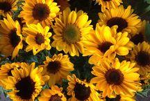 Daisy 2nd Sept - Sunflower theme!
