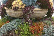 Succulents and container gardening