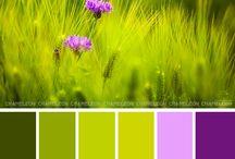 Color patter