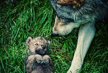 dogs / by courtny sauer