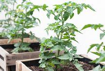 Kräuter & Gemüse auf dem Balkon / Auf kleinstem Raum Gemüse und Kräuter anbauen