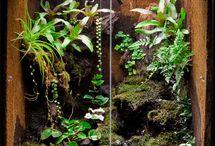 Aquarium and terrarium / Ideas for reptile terrariums and aquarium ideas