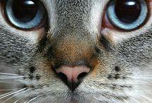 M-cat