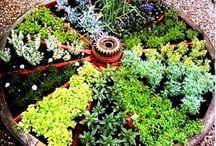 Herb Gardens & Herbs