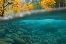 Sous la surface du fleuve