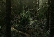 Forests