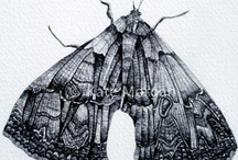 Illustration: Biro Drawings / My own work
