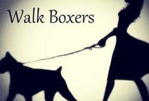 boxerbilder