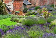 zahrada je ráj