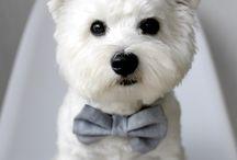 Dog style / Ta tablica jest o: psach i ih modzie :)