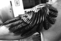 tatus plomes cames