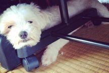 My dog    U^ェ^U
