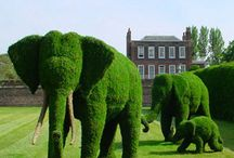 Garden Inspirations / Appealing and unusual garden designs and topiary art