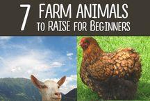 Homesteading Dreams / Ideas for fulfilling the mini farm dream.