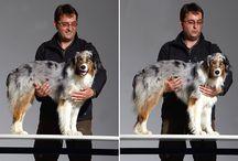 Hunde - Training und Beschäftigung / Hier sammle ich alles rund um das Training und die Beschäftigung von Hunden - egal, ob Grunderziehung, Spiele oder Tricks.